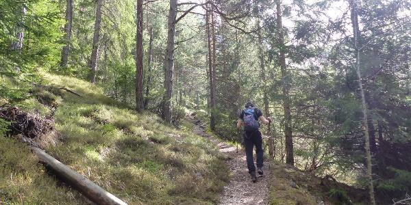 Der schattige Kiefernwald bietet ein zu Beginn ein sehr angenehmes Eingehen.