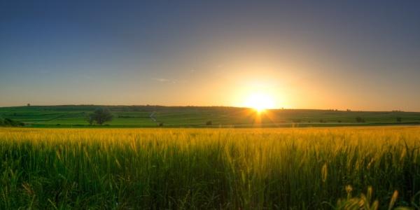Über Wiesen und Felder