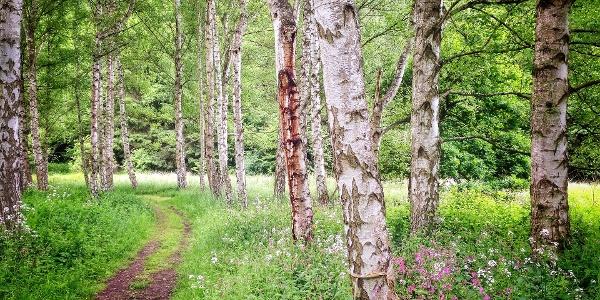 Wandern durch den Wald
