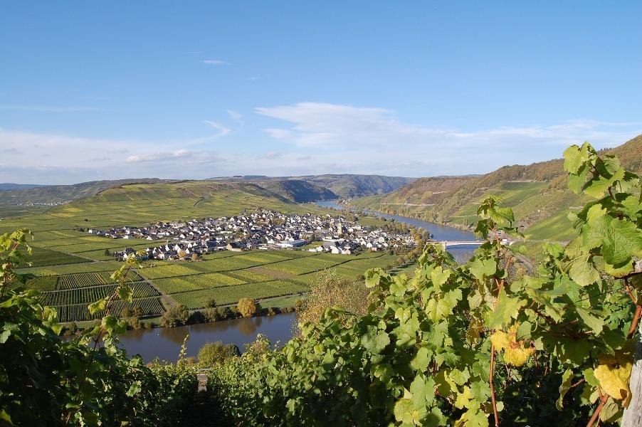 Foto: Die Moselschleife bei Trittenheim