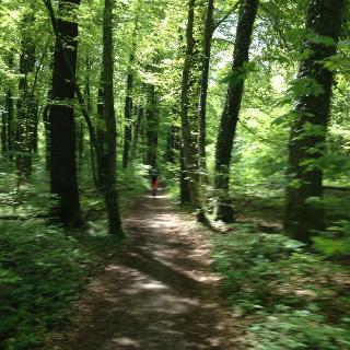 ... durch den Wald nach Riederau ...
