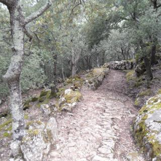 Felsige Wege durch Eichenwälder