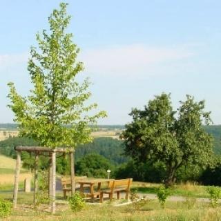 Neunkirchen - Aussichtspunkt Linde
