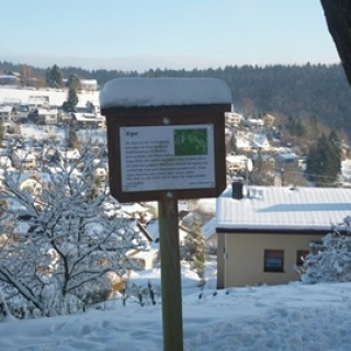 Wilhelmsfeld - Baumtafel