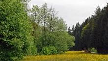 Im östlichen Schurwald