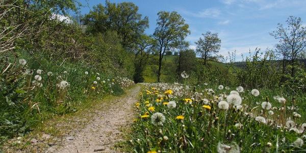 Am Hang des Hirschberges entlang