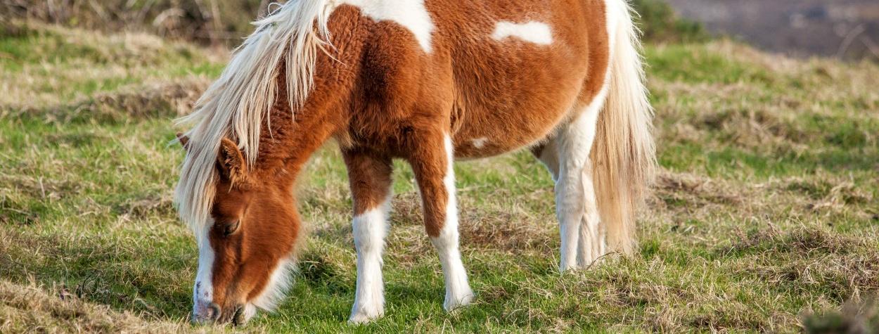 Pferde_1