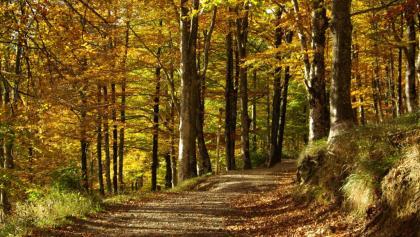 Weg durch den Buchenwald bei Lizarrusti