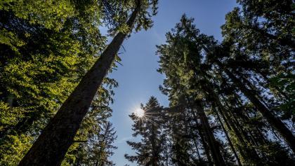 Ruhige Waldwege laden zum Wandern ein