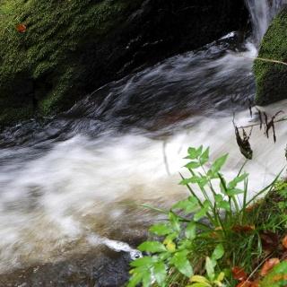 Wasserläufe entlang des Weges