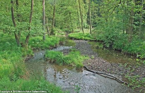 Arnsberger Wald Neuhaus - Naturerlebnisweg an der Heve bei Neuhaus