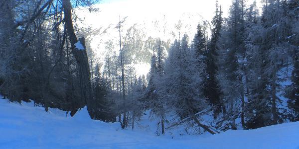 Aufstieg zuerst Waldsteig