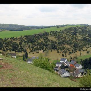 Wacholderheide vom Kalvarienberg, Alendorf, Eifel, NRW, Deutschland