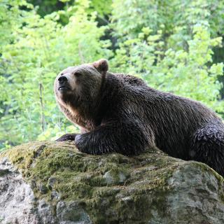 Tierfreigelände Neuschönau Bayerischer Wald