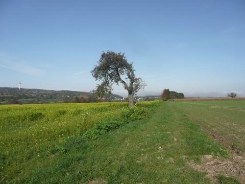 herbstliche Felder bei Palmbach