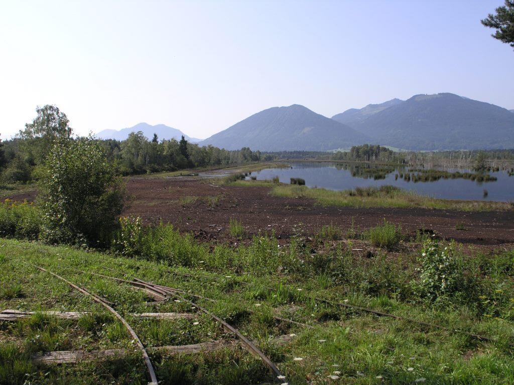 Moor erleben in der Nicklheimer Filze