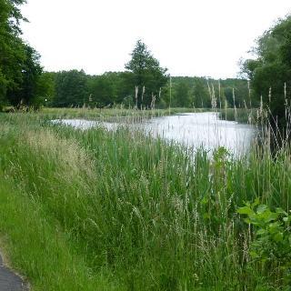 Hinter Eberswalde am Finowkanal