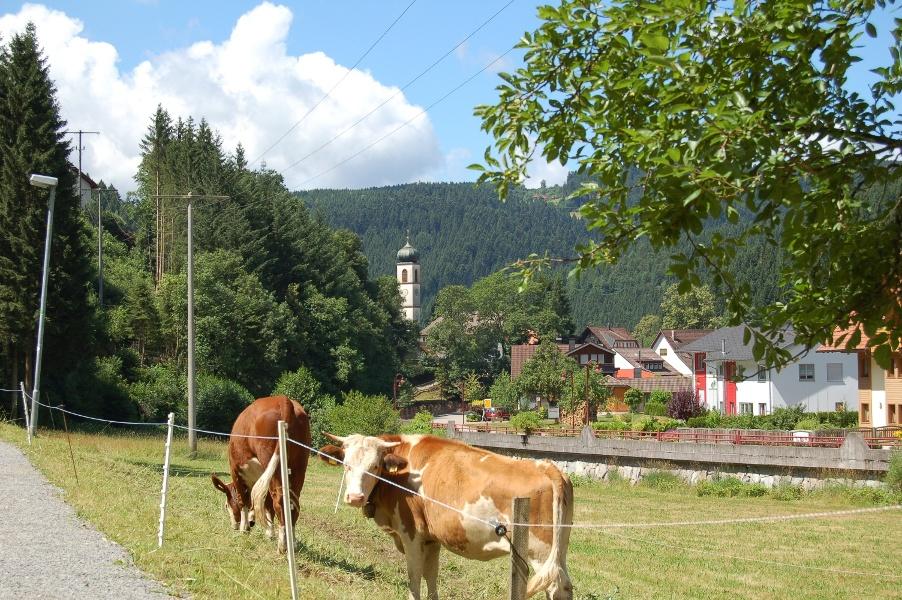 Bad Rippoldsau/Schapbach - Wolftal-Promenadenweg