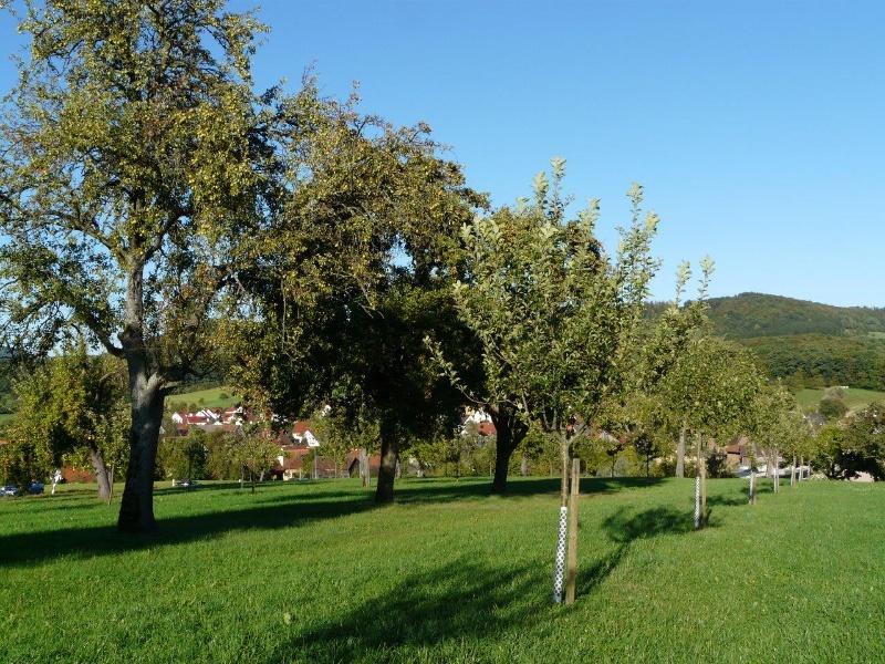 Obstsorten-Lehrpfad Eislingen/Fils