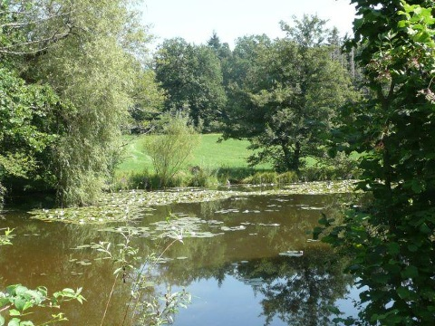 Seerosen im Herrmannsee
