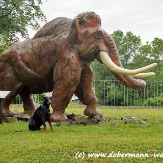 Mammut Max bei Monrepos