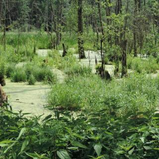Blick über das Moorgebiet kurz vor der Autobahn-Unterführung