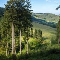 Die Wälder im Schmallenberger- Sauerland