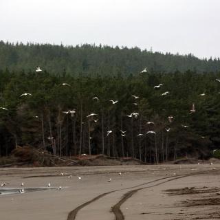 Viele Vögel am Strand