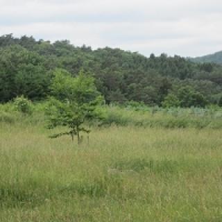 Blick über Wiesen und 'Wälder