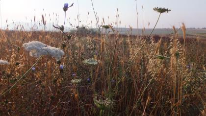 צמחיה בסמוך להר קרני חיטים