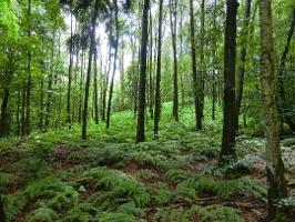 Foto Märchenhafter Wald an der Nordseite des Gohrisch