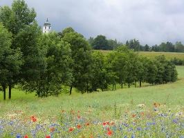 Foto Farbenfrohe und duftende Wiesen am Fuß des Papststeines - hinten die Kirche von Papstdorf