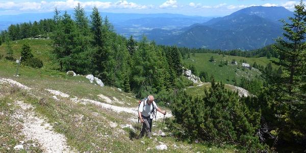 Beim Aufstieg oberhalb der Waldgrenze