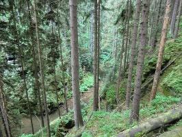 Foto Blick hinab zur Kirnitzsch zwischen Reißersgrund und Oberer Schleuse