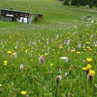 Bergwiesen bei Winterberg-Altastenberg