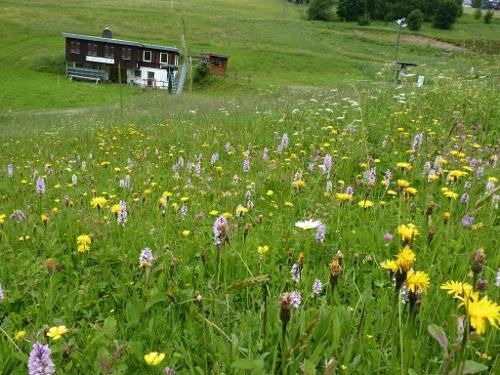 Bergwiesenpfad Altastenberg, Start und Ziel in Winterberg-Altastenberg