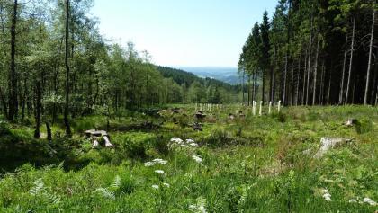 Blick über eine Kyrillfläche nach Meinerzhagen
