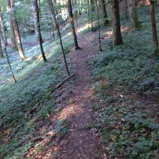 Kocher-Jagst-Trail von der Hertensteiner Mühle nach Eberbach
