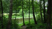 Lesefährte Waldweisen