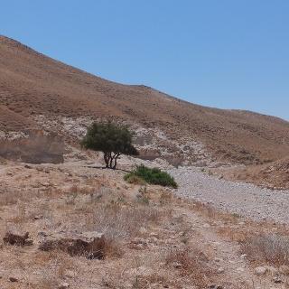 Das karge, aber dennoch faszinierende Og Wadi