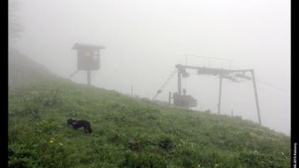 Lift unter dem Vogelsang am Kleinen Traithen, Mangfallgebirge, Bayern, Deutschland