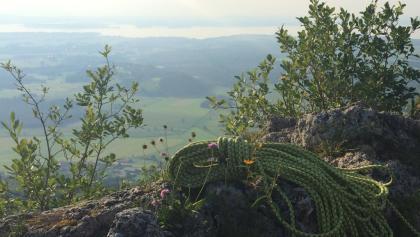 Aussicht vom Engelstein auf den Chiemsee