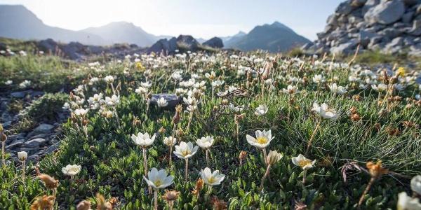 Die Flora auf der Anhöhe.