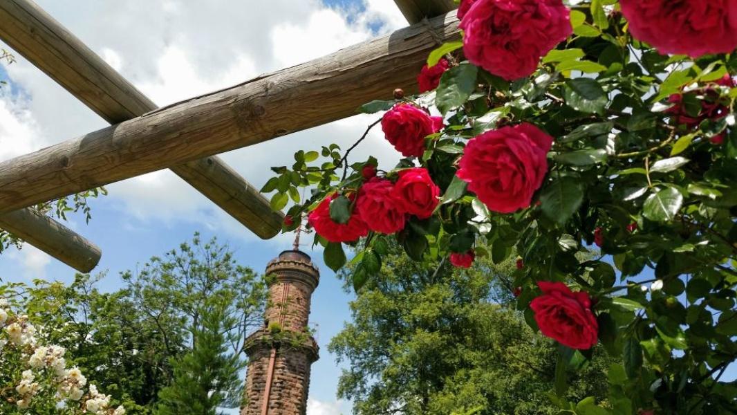 Vom Marktplatz zum höchstgelegenen Rosenweg Deutschlands