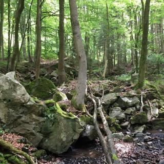 Ahneschlucht mit Steinen