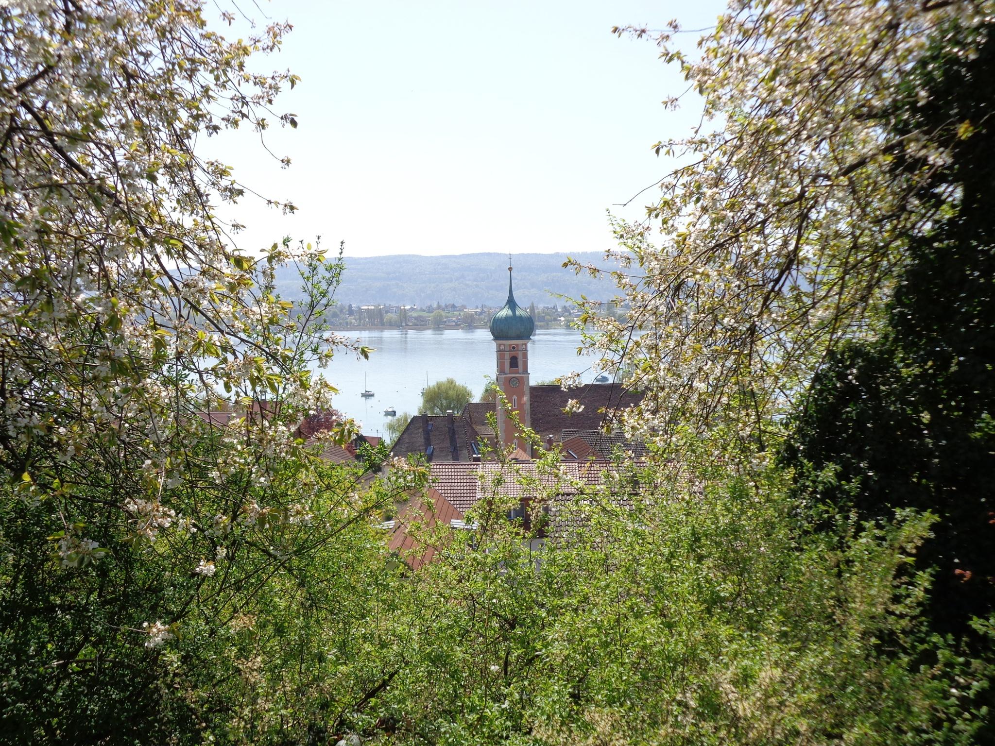 Blick auf Allensbach vom Höhrenberg