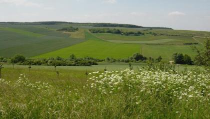Blick ins Selztal bei Morschheim