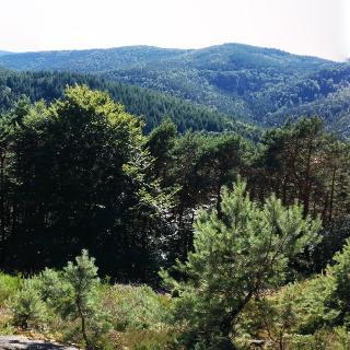 Blick Westseite Kalmit zur Totenkopfhütte