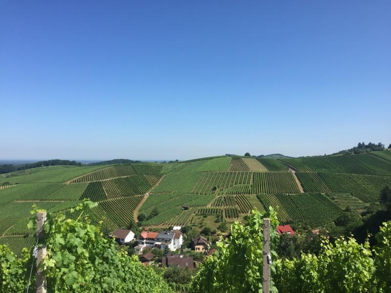 Schwarzwald Singles