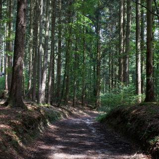 Höchster Punkt der Tour: 646m üNN im Egmatinger Forst